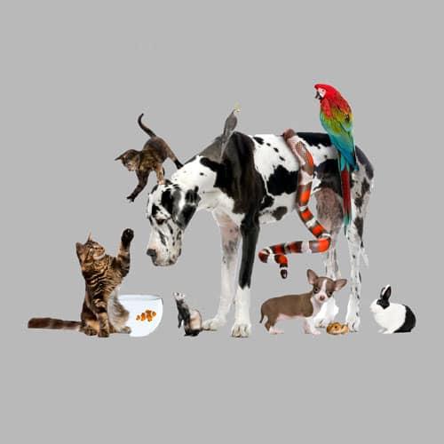 Premium Pet Relocation Transport Service